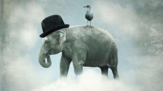 elephant bird 320x180 - 無料(フリー)のイラスト素材サイト・サービスまとめ「商用利用も可能」