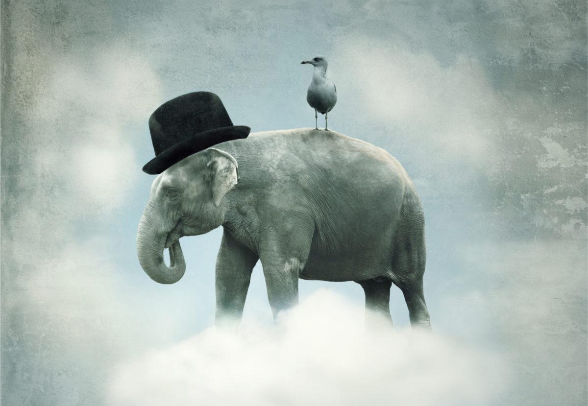 elephant-bird
