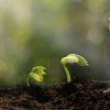 plant 1 100x100 - 無料でWebサイト(ホームページ)を作成する方法とツール