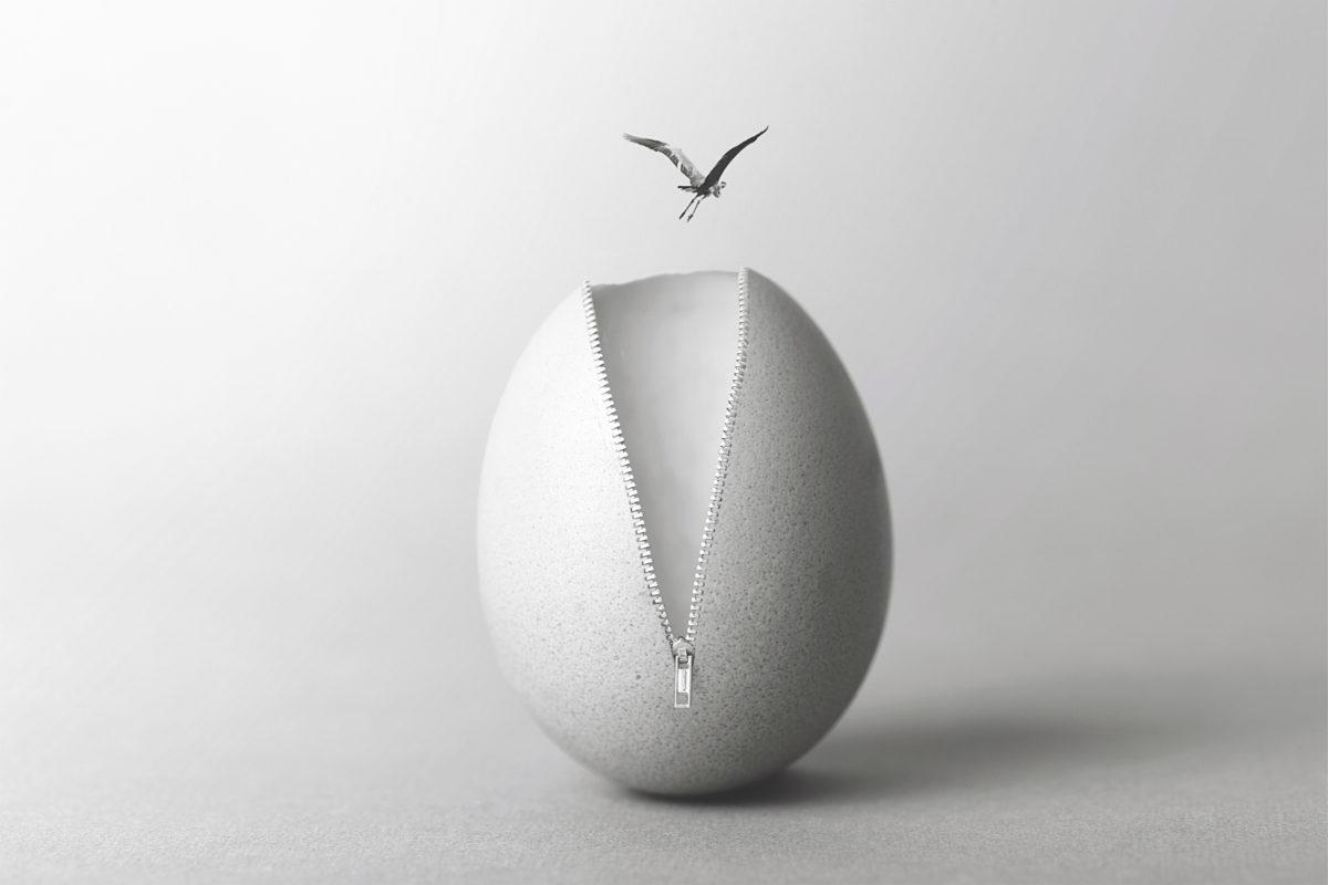 bird-egg