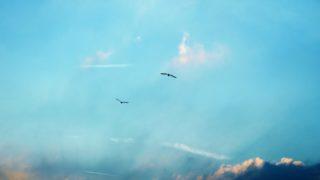 sky bird 2 320x180 - デザインの勉強方法「学校(スクール)・独学などの代表的な学び方と選び方」