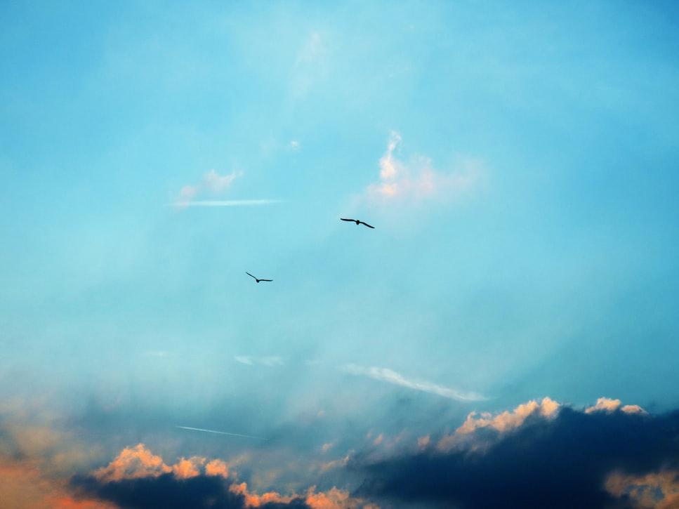 sky-bird-2