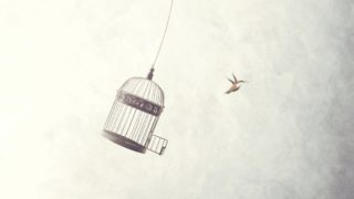 bird cage 320x180 - デザイナーが独立してフリーランスになるメリット・デメリット「事前に知っておきたい特徴」