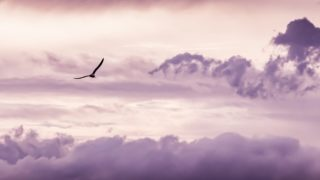 bird pink cloud 320x180 - デザイナーが独立してフリーランスになるための準備「考えておくこと・すべきこと」