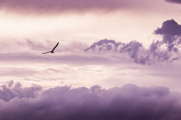 bird-pink-cloud