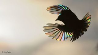 victor tyakht art 320x180 - 鳥をテーマにした様々なデザインやアート